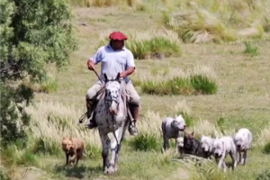 man hunting with his Argentinian Mastiffs
